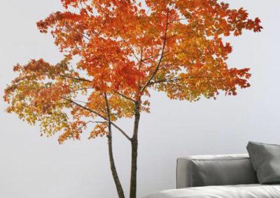 81127 Orange Tree