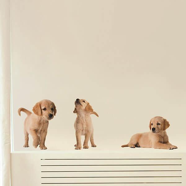 54252 Puppies M