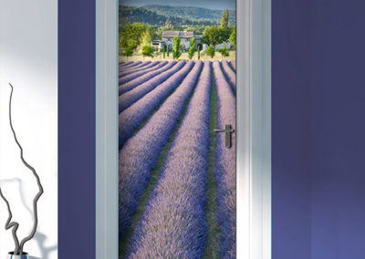 23502 Lavender Field