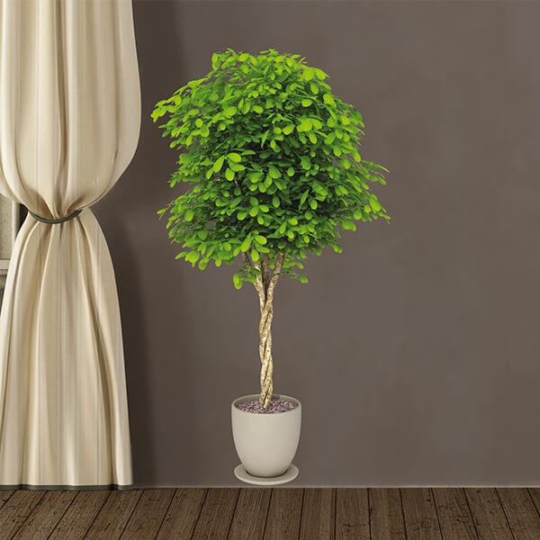 57722 Plant XL